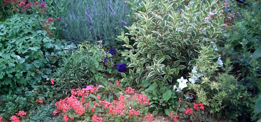Conseillez moi un massif de plantes vivaces for Plantes et arbustes vivaces