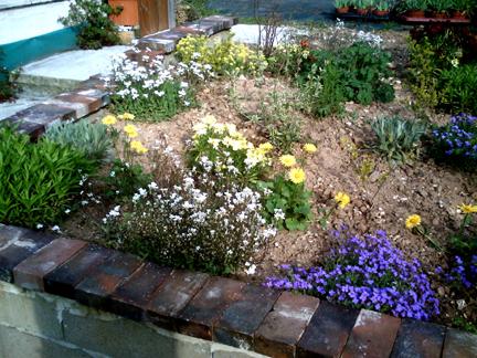 Fleurs massifs vivaces for Plantes et fleurs vivaces